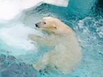1 111 150x112 - 冬こそ狙い目!動物園デートのメリットと服装と楽しみ方