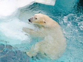 1 111 280x210 - 冬こそ狙い目!動物園デートのメリットと服装と楽しみ方