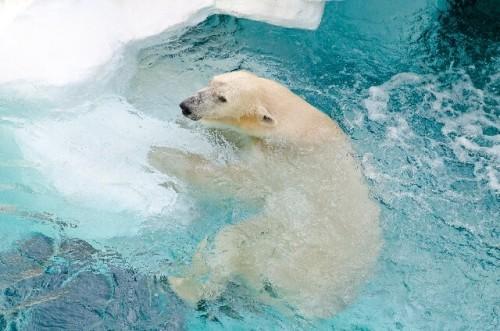 1 111 500x331 - 冬こそ狙い目!動物園デートのメリットと服装と楽しみ方