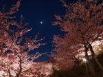 2 1 150x112 - ムード満点な夜桜デートを目いっぱい楽しむコツは?服装・コーデ・持ち物はコレ!