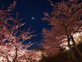 2 1 280x210 - ムード満点な夜桜デートを目いっぱい楽しむコツは?服装・コーデ・持ち物はコレ!