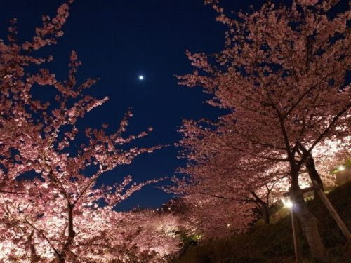 2 1 500x375 - ムード満点な夜桜デートを目いっぱい楽しむコツは?服装・コーデ・持ち物はコレ!